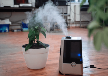Does a Humidifier Help with Allergies